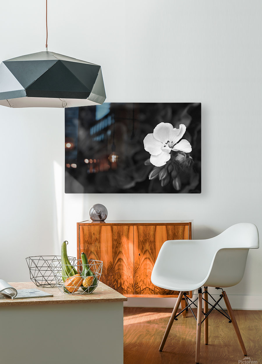 Blooming side flower B&W  HD Metal print with Floating Frame on Back