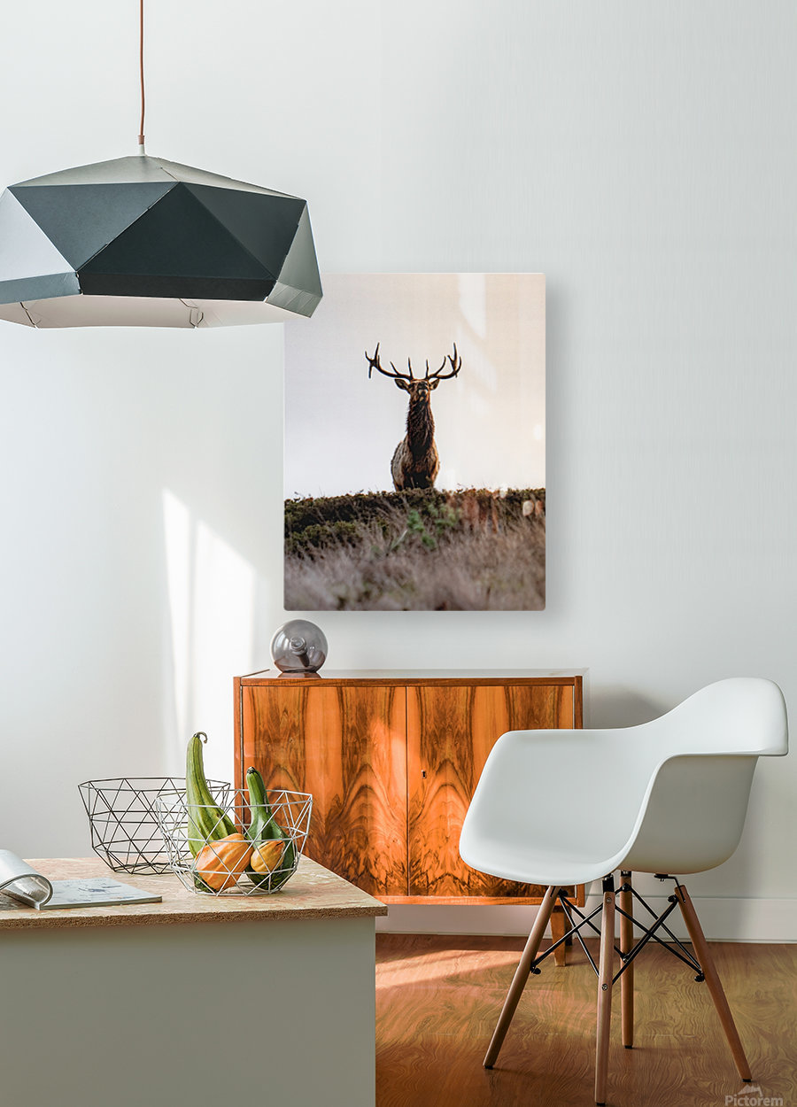Tule Elk On Top Of A Hill  HD Metal print with Floating Frame on Back