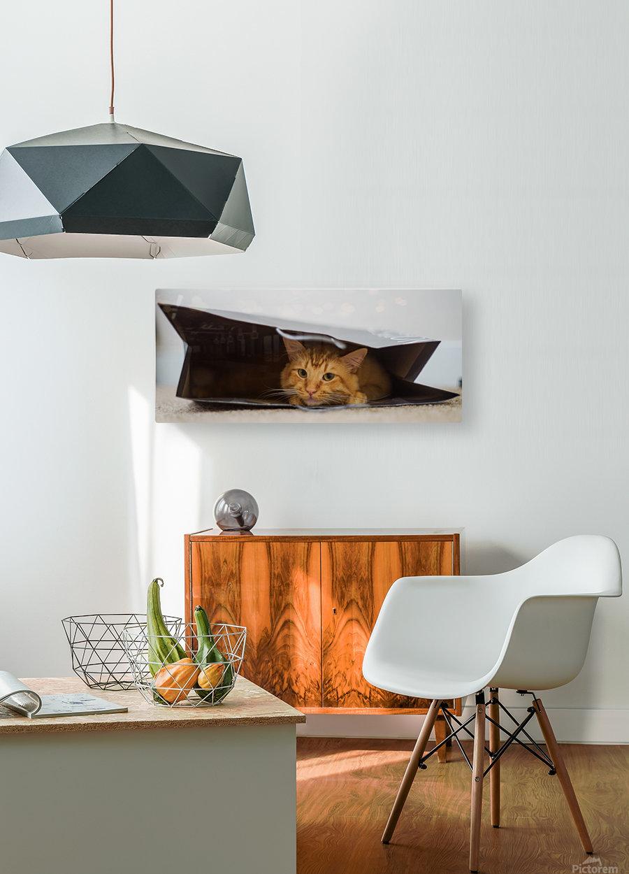Cat In The Bag  Impression métal HD avec cadre flottant sur le dos