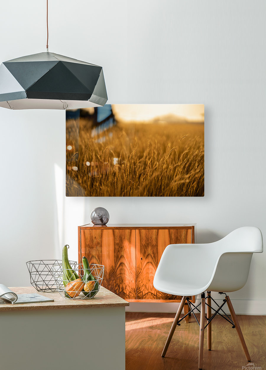 Golden Hour Field  HD Metal print with Floating Frame on Back
