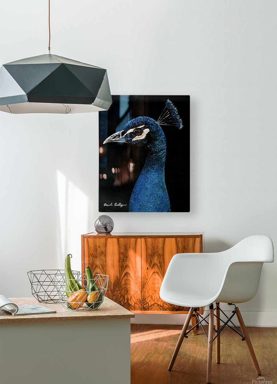Peacock Portrait  HD Metal print with Floating Frame on Back