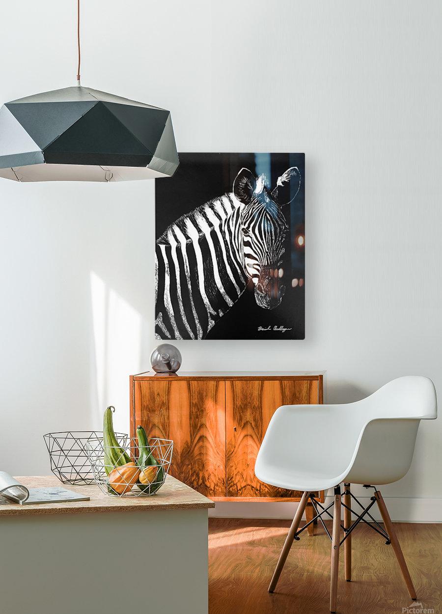 Zebra Portrait  HD Metal print with Floating Frame on Back