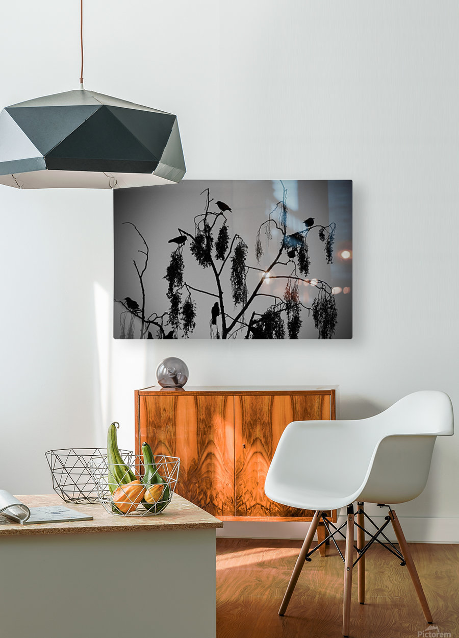Crows 2016   1  HD Metal print with Floating Frame on Back