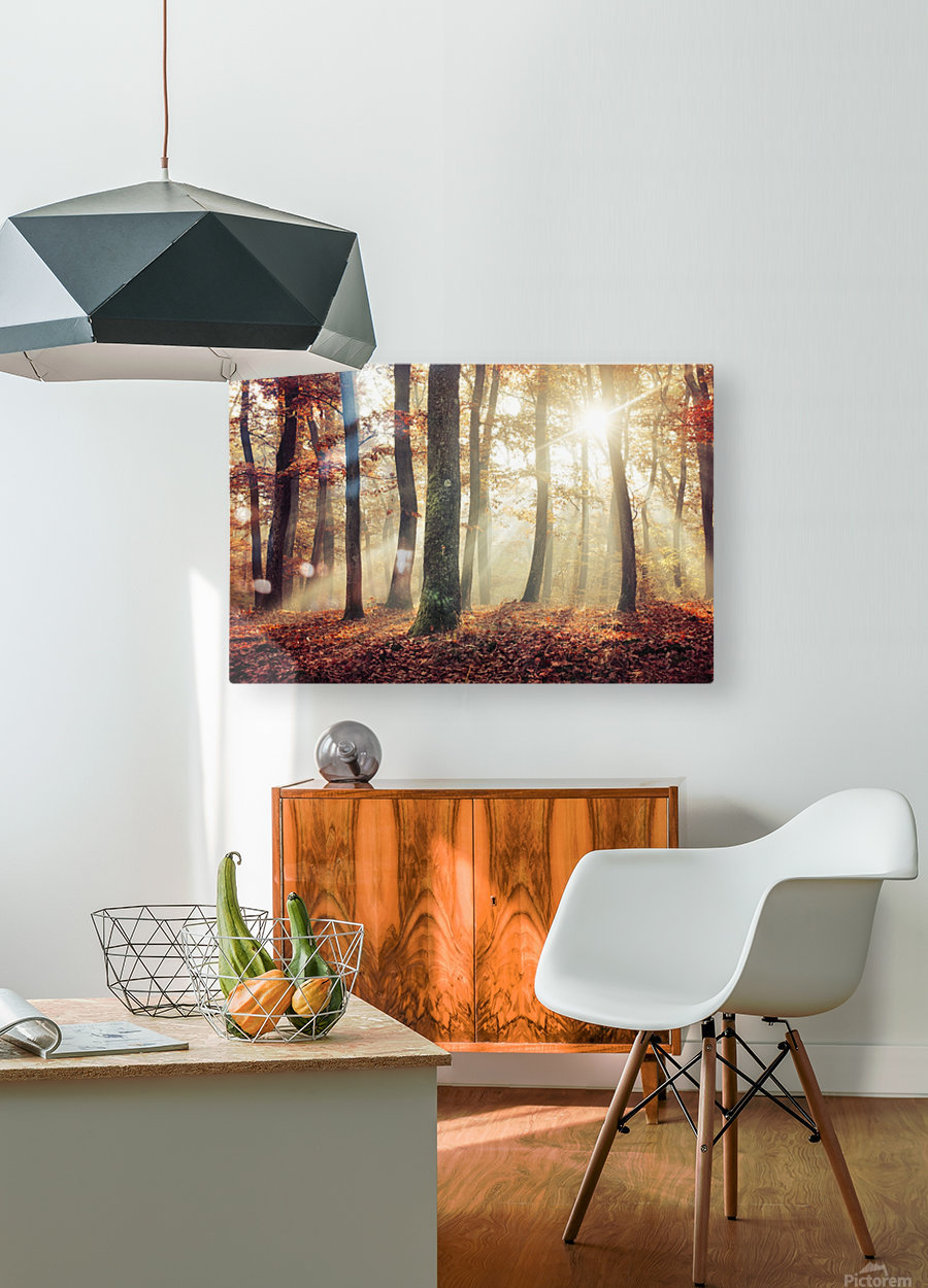Autumn forest  HD Metal print with Floating Frame on Back