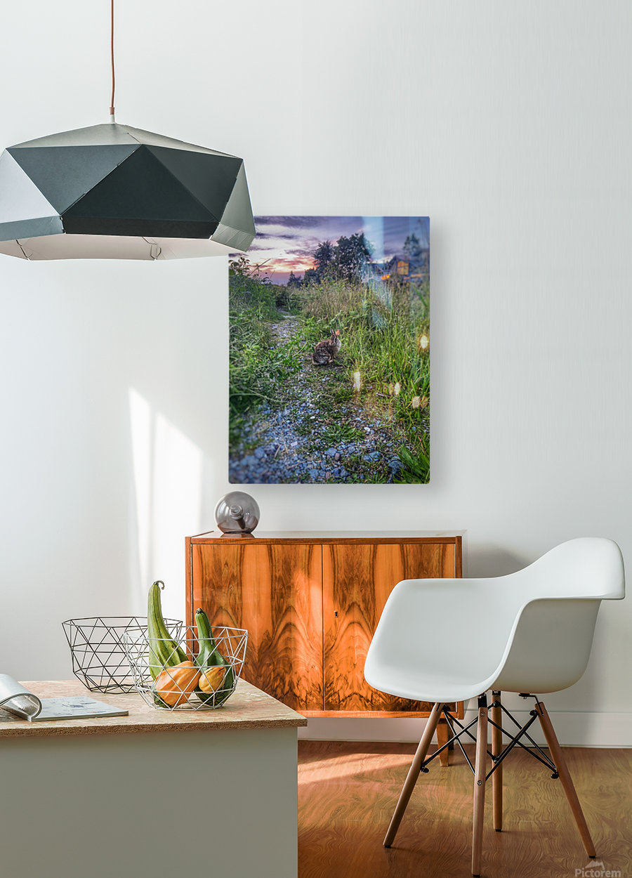 Sunset bunny  HD Metal print with Floating Frame on Back