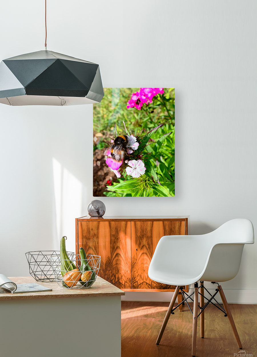 Bumblebee   HD Metal print with Floating Frame on Back