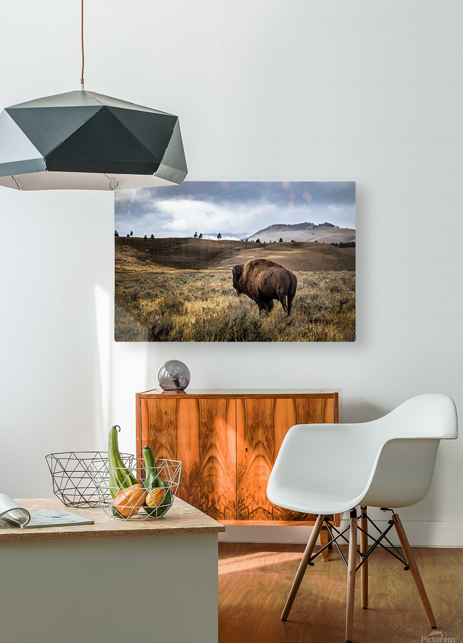 Stormy Bison  HD Metal print with Floating Frame on Back