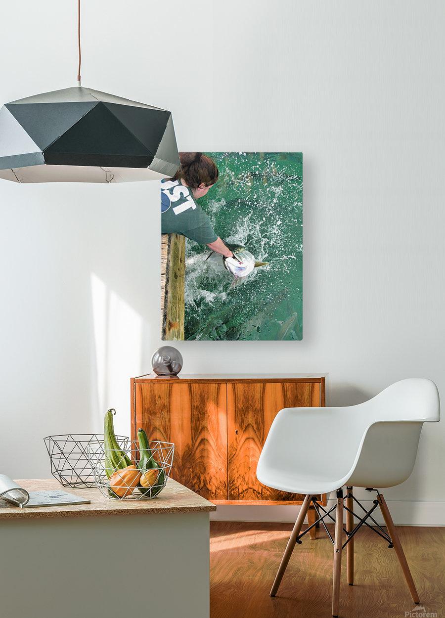 Tarpon Feeding  HD Metal print with Floating Frame on Back