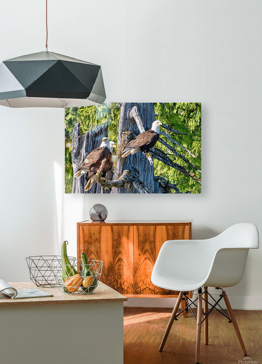 Eagle Tree  HD Metal print with Floating Frame on Back