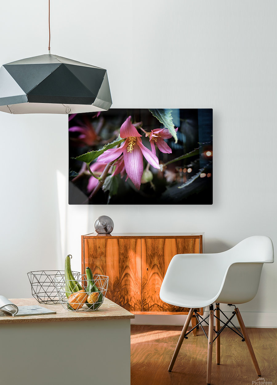 Begonia   HD Metal print with Floating Frame on Back