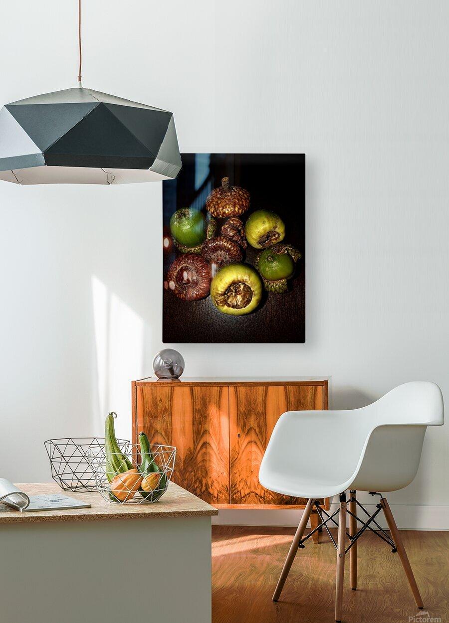 Acorn arrangement  HD Metal print with Floating Frame on Back