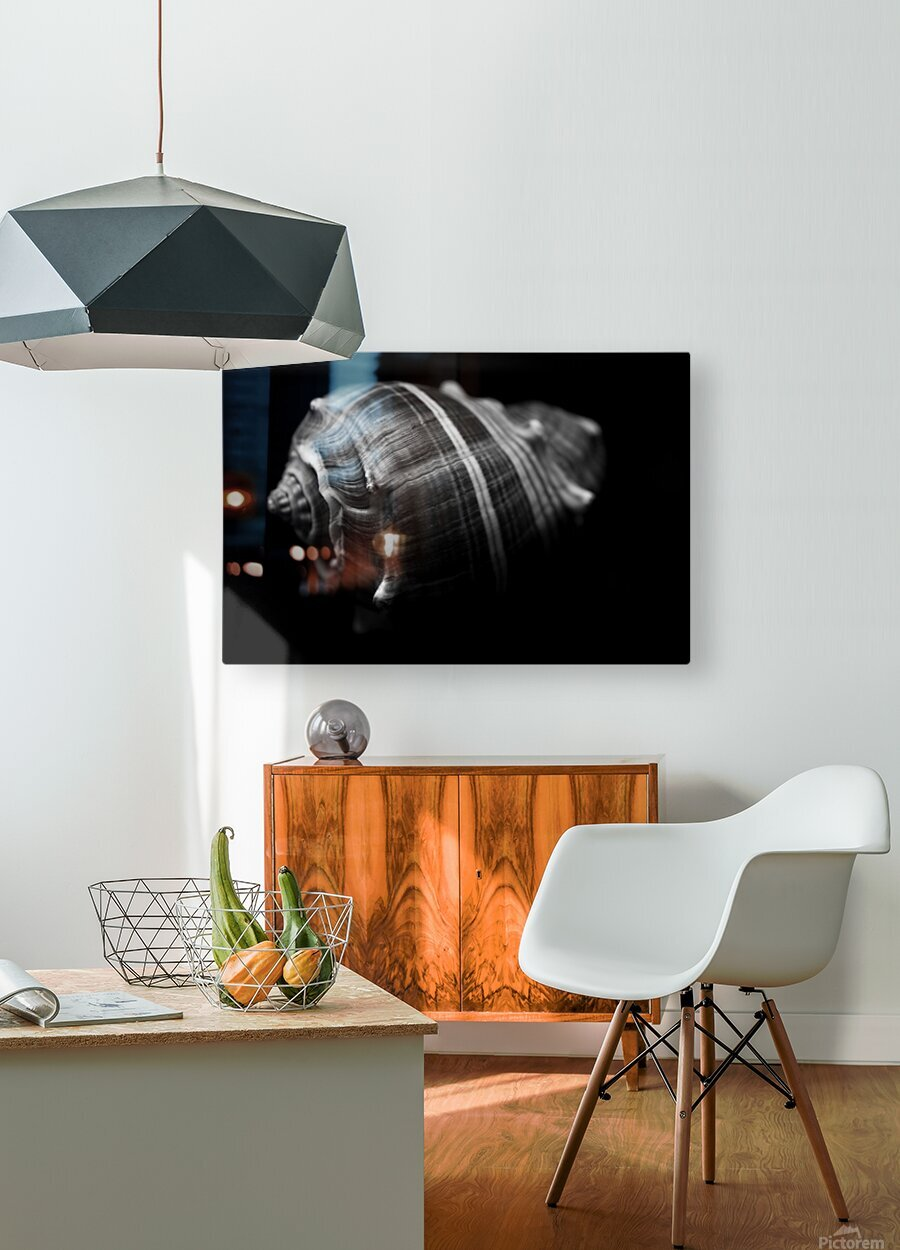 Series of shells  HD Metal print with Floating Frame on Back