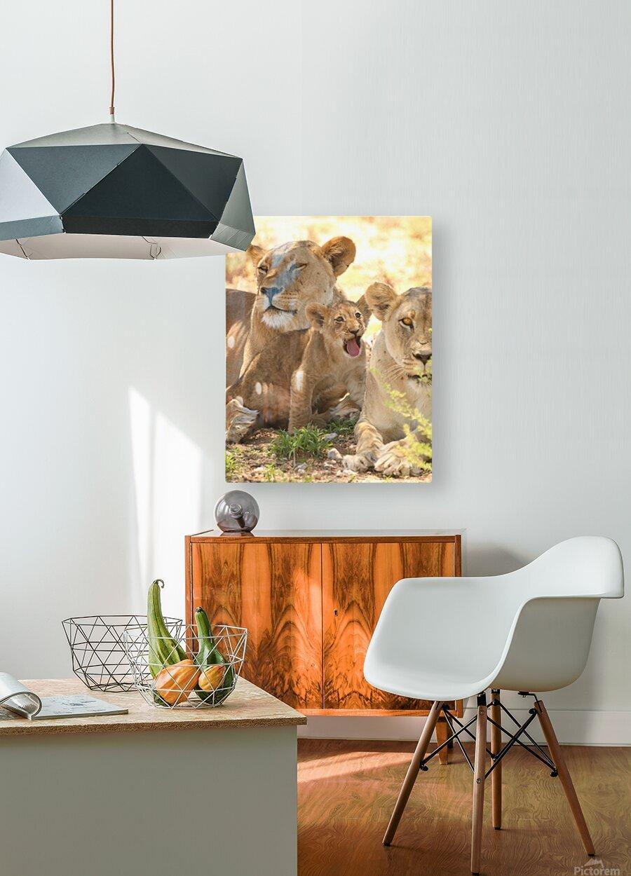 AdriaanPrinsloo 6659  HD Metal print with Floating Frame on Back
