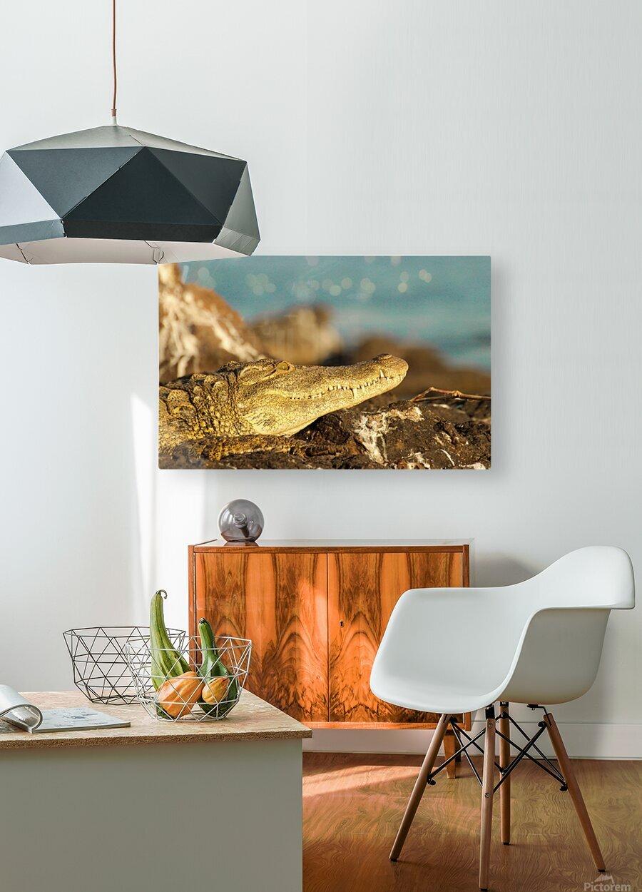 AdriaanPrinsloo 8074  HD Metal print with Floating Frame on Back