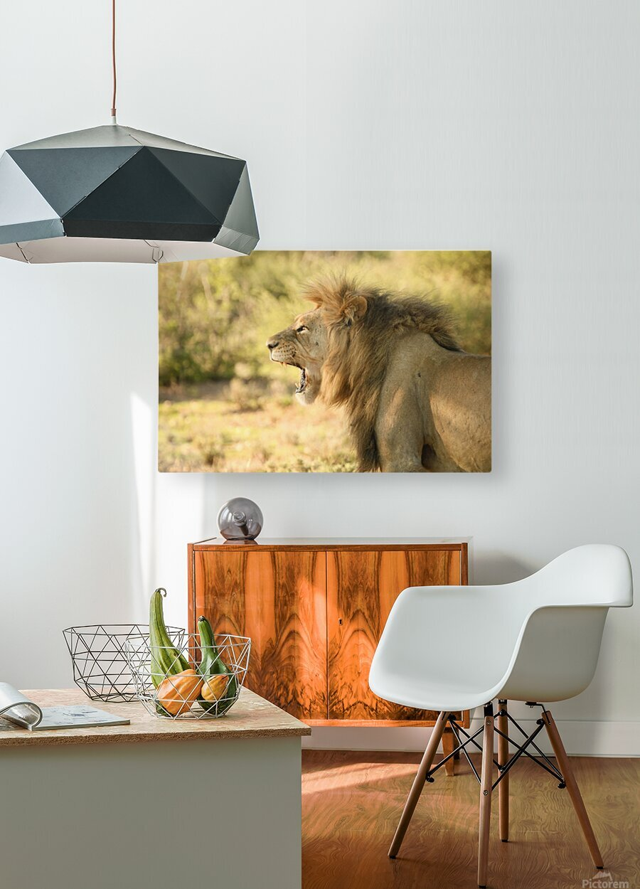 AdriaanPrinsloo 6942  HD Metal print with Floating Frame on Back