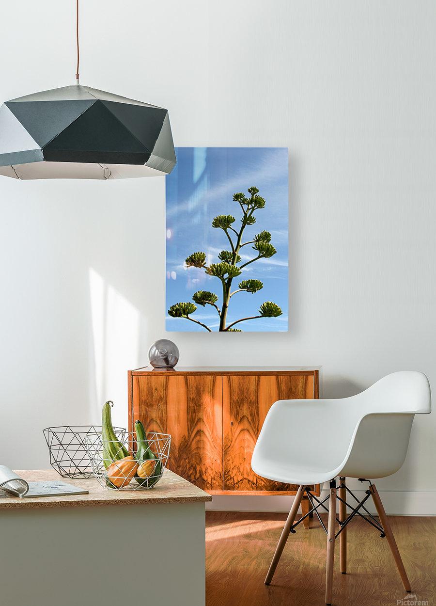 Cacti Mundo 01  HD Metal print with Floating Frame on Back
