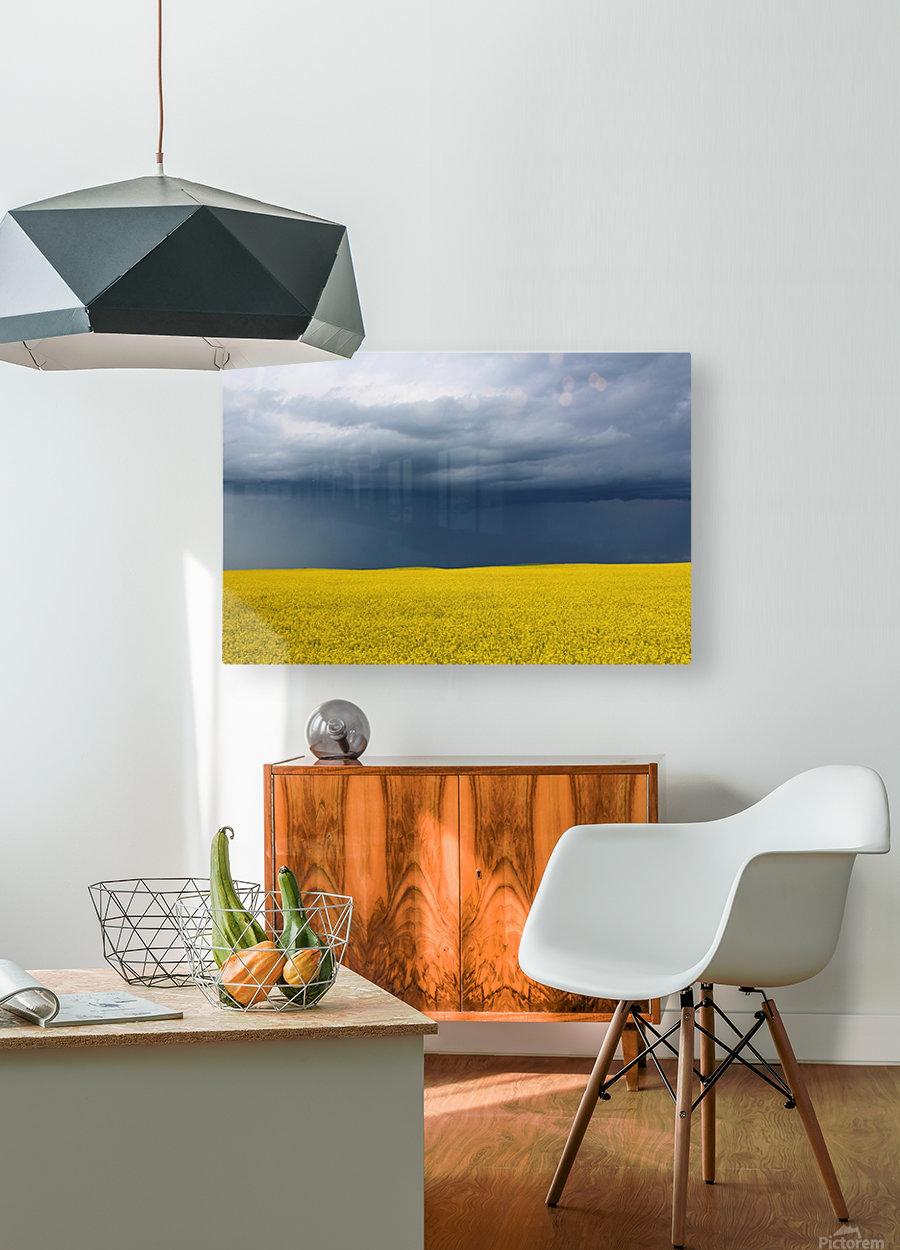 Summer Canola  HD Metal print with Floating Frame on Back