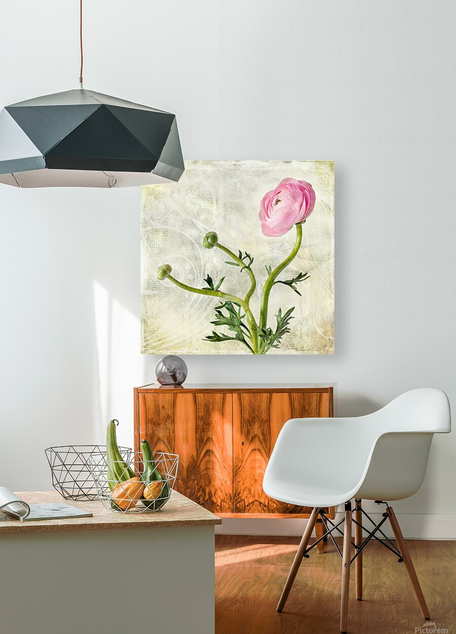 Pink buttercup  HD Metal print with Floating Frame on Back
