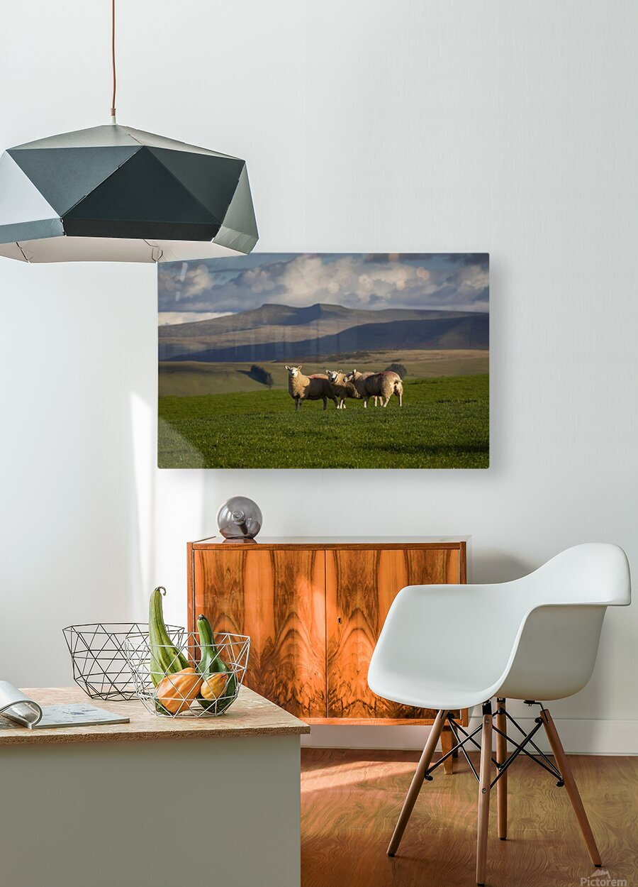 Sheep on the Brecon Beacons  HD Metal print with Floating Frame on Back
