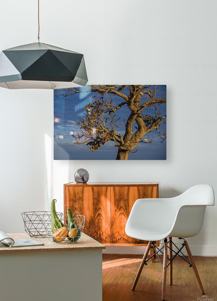 Renewal  HD Metal print with Floating Frame on Back