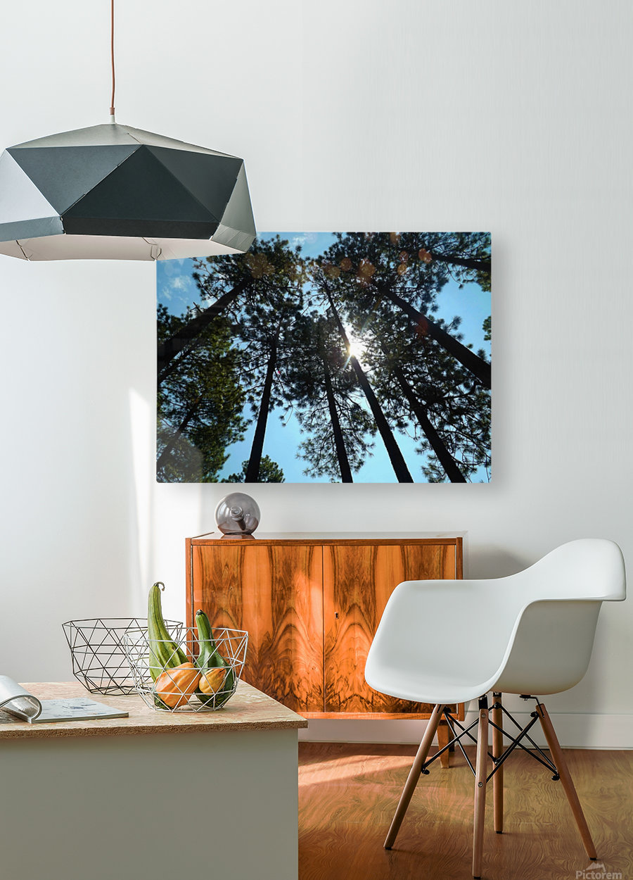 Look Up  HD Metal print with Floating Frame on Back
