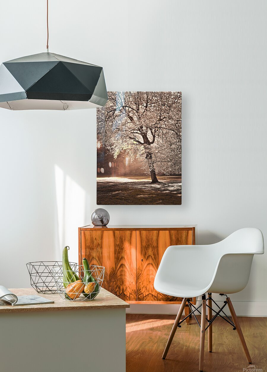 Autumn tree in sunlight  HD Metal print with Floating Frame on Back