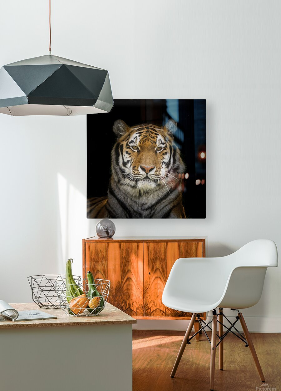 Tiger face  HD Metal print with Floating Frame on Back