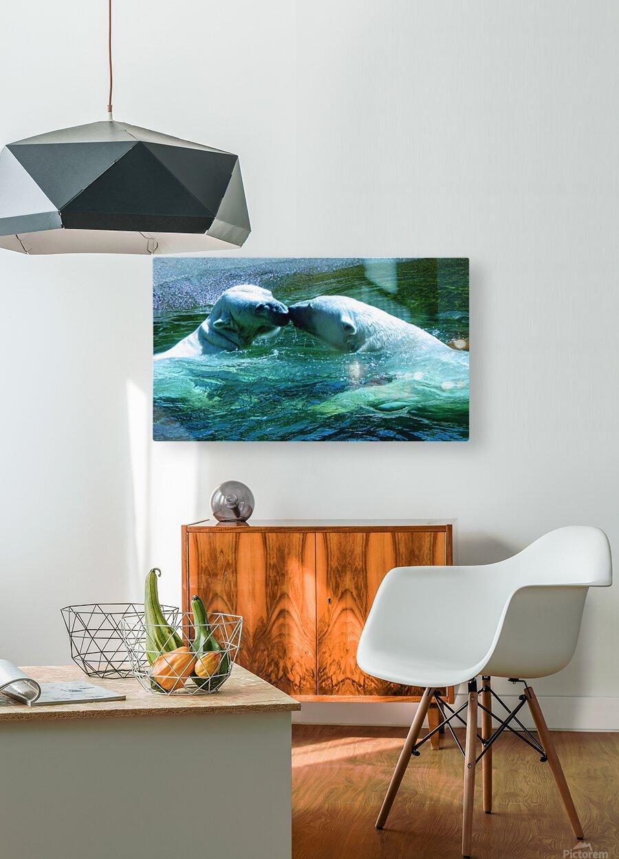 Kiss Me Polar Bears  HD Metal print with Floating Frame on Back