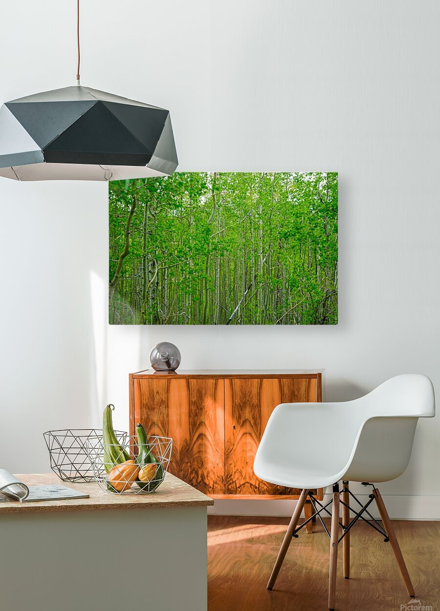 New Growth  HD Metal print with Floating Frame on Back