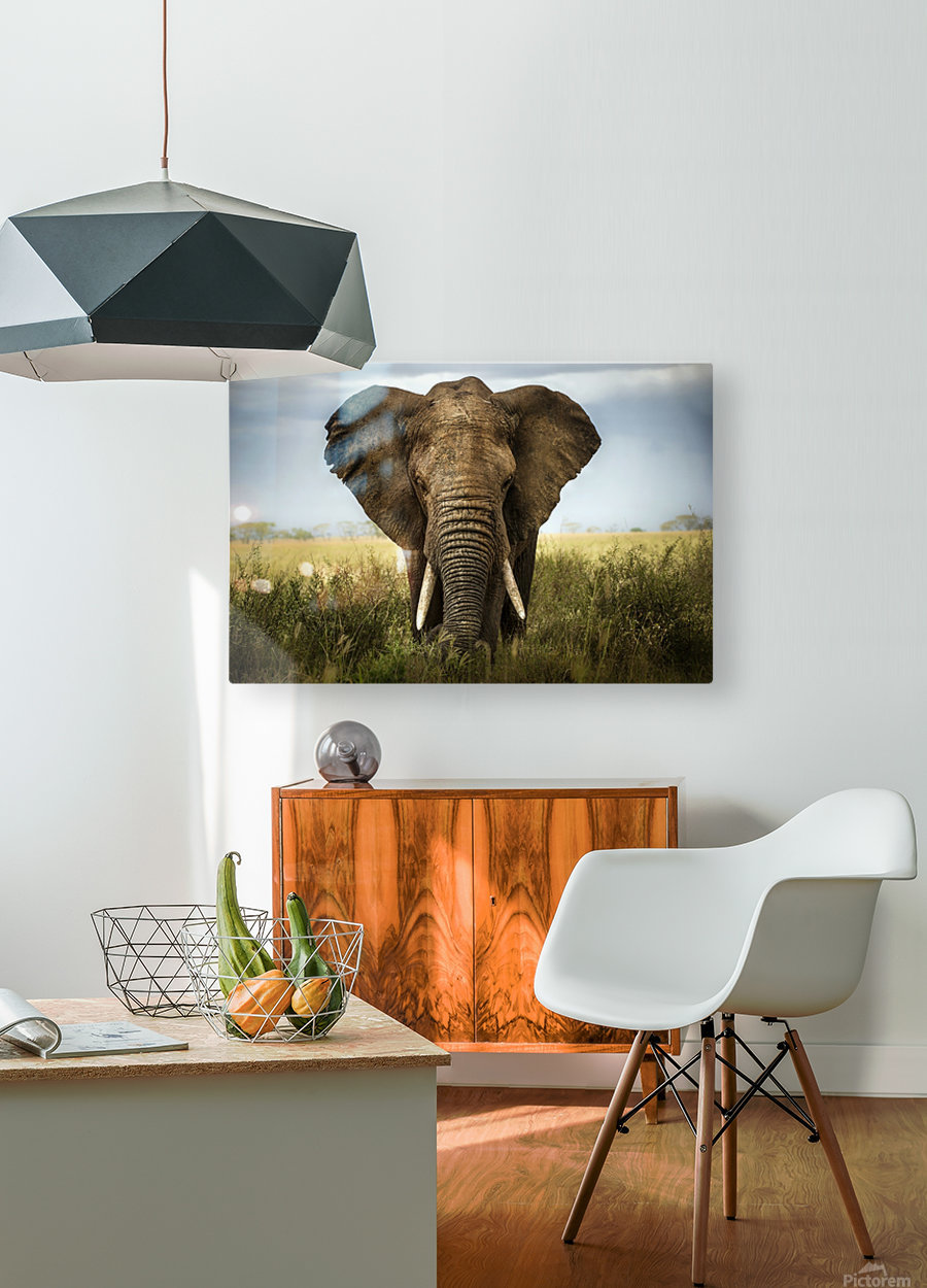 Encounters in Serengeti  HD Metal print with Floating Frame on Back