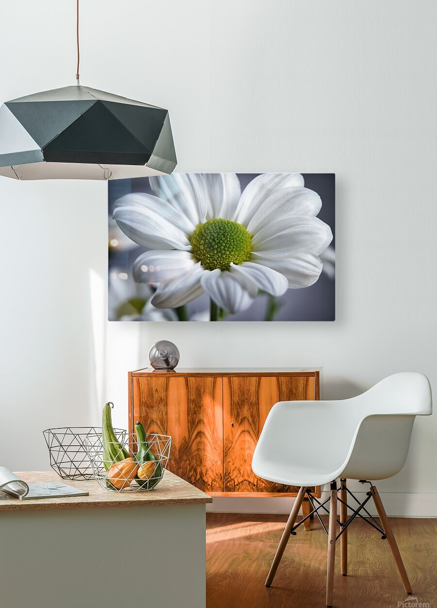 White Daisy  HD Metal print with Floating Frame on Back