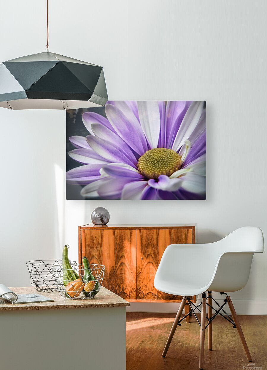 Purple Daisy  HD Metal print with Floating Frame on Back