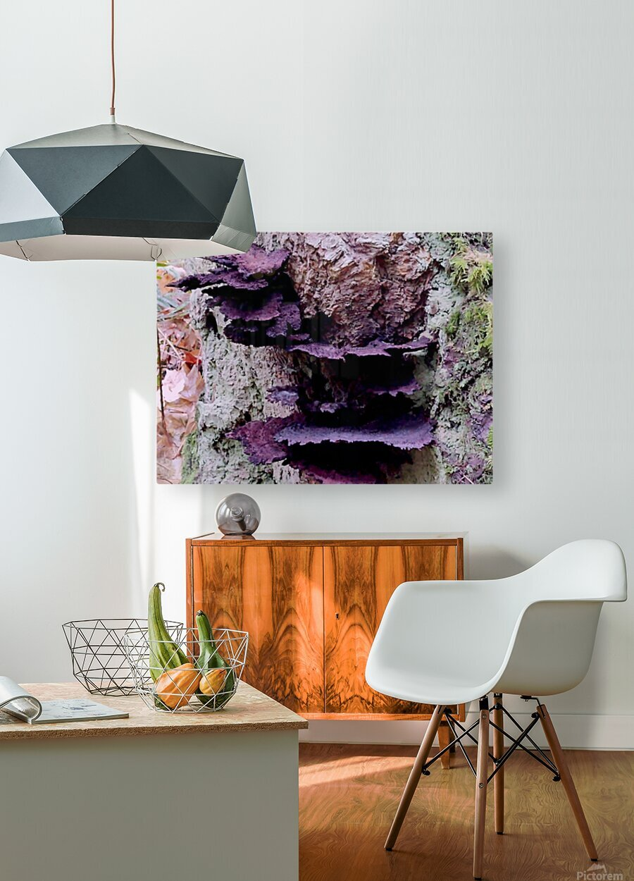 Tiny World 8 of 8 - Mushrooms and Fungi  HD Metal print with Floating Frame on Back