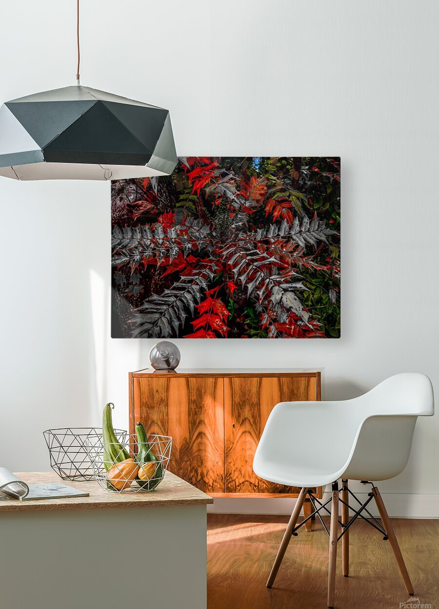 Holly Explosion  HD Metal print with Floating Frame on Back
