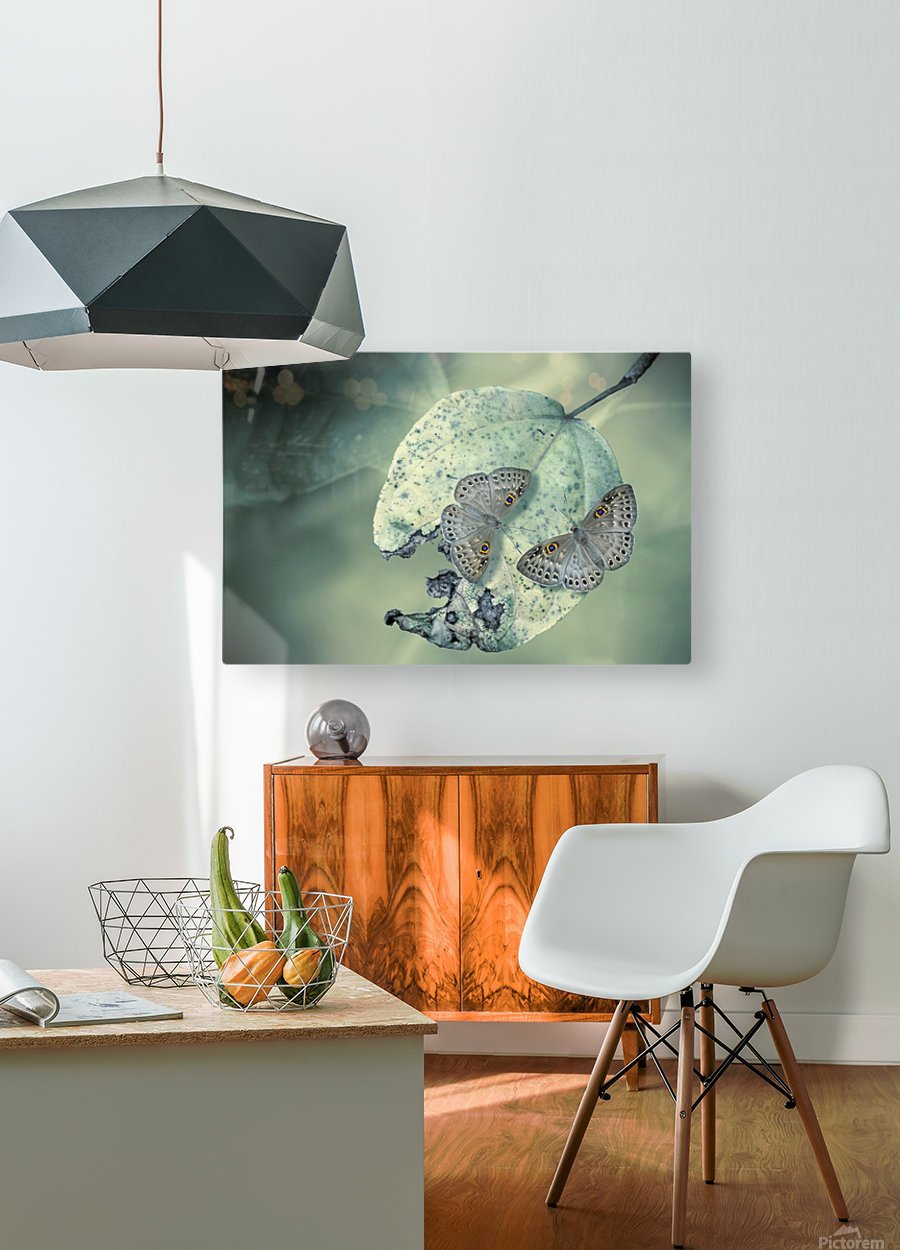 Duet  HD Metal print with Floating Frame on Back