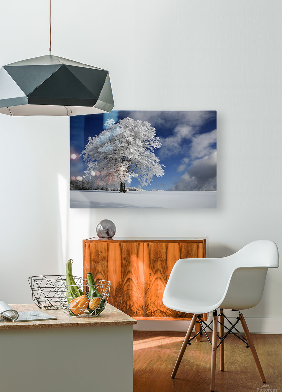 White Windbuche in Black Forest  HD Metal print with Floating Frame on Back