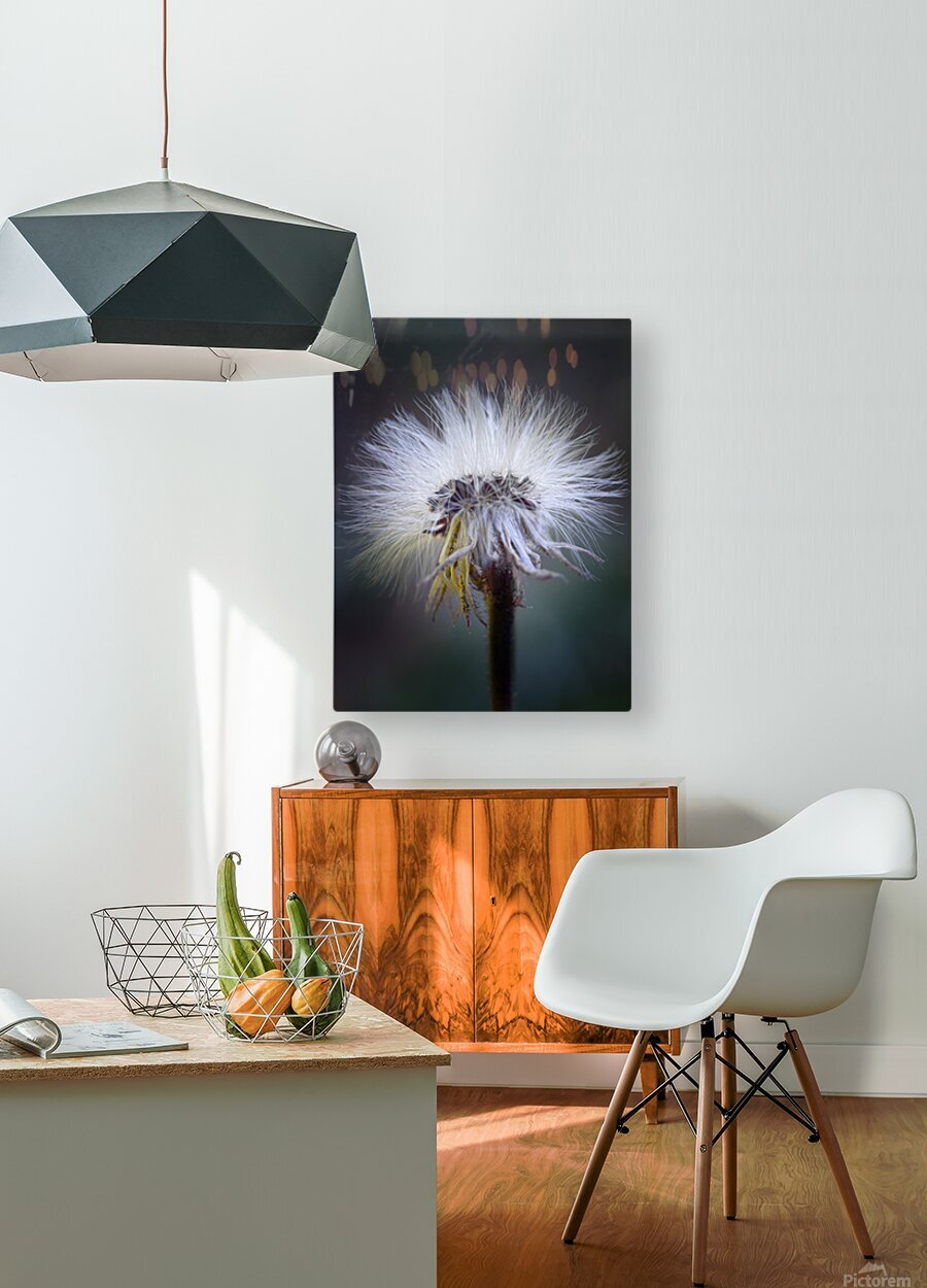Cheveux d ange  HD Metal print with Floating Frame on Back