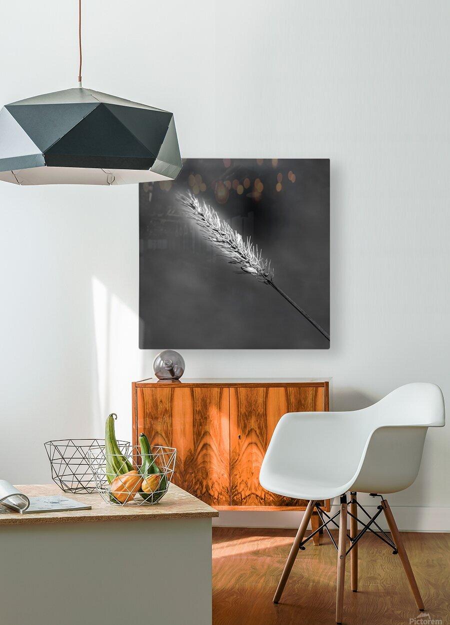 Epine  HD Metal print with Floating Frame on Back
