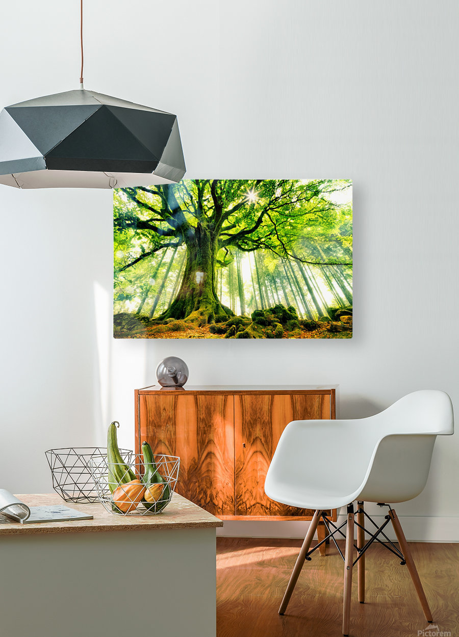 Ponthus Beech by Christophe Kiciak   HD Metal print with Floating Frame on Back