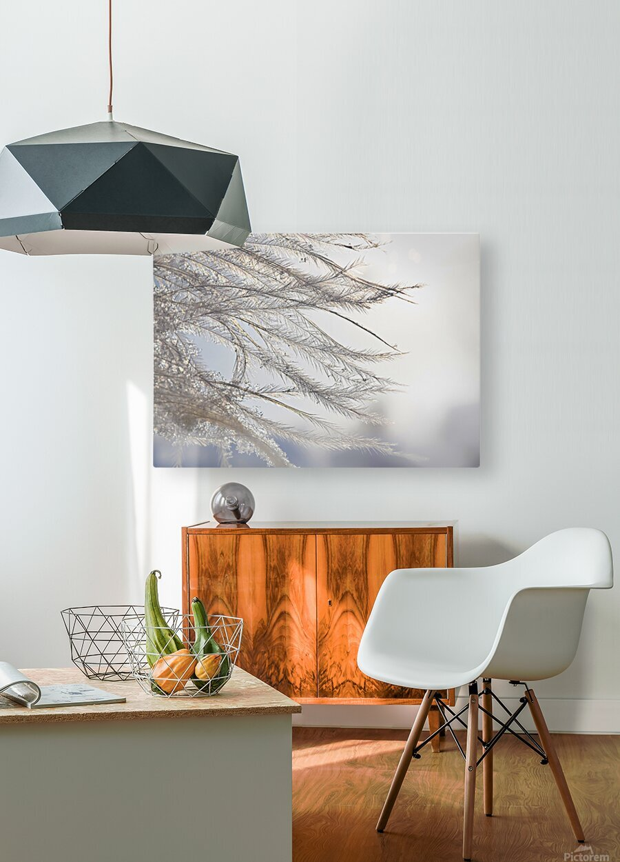 Plumeau  HD Metal print with Floating Frame on Back