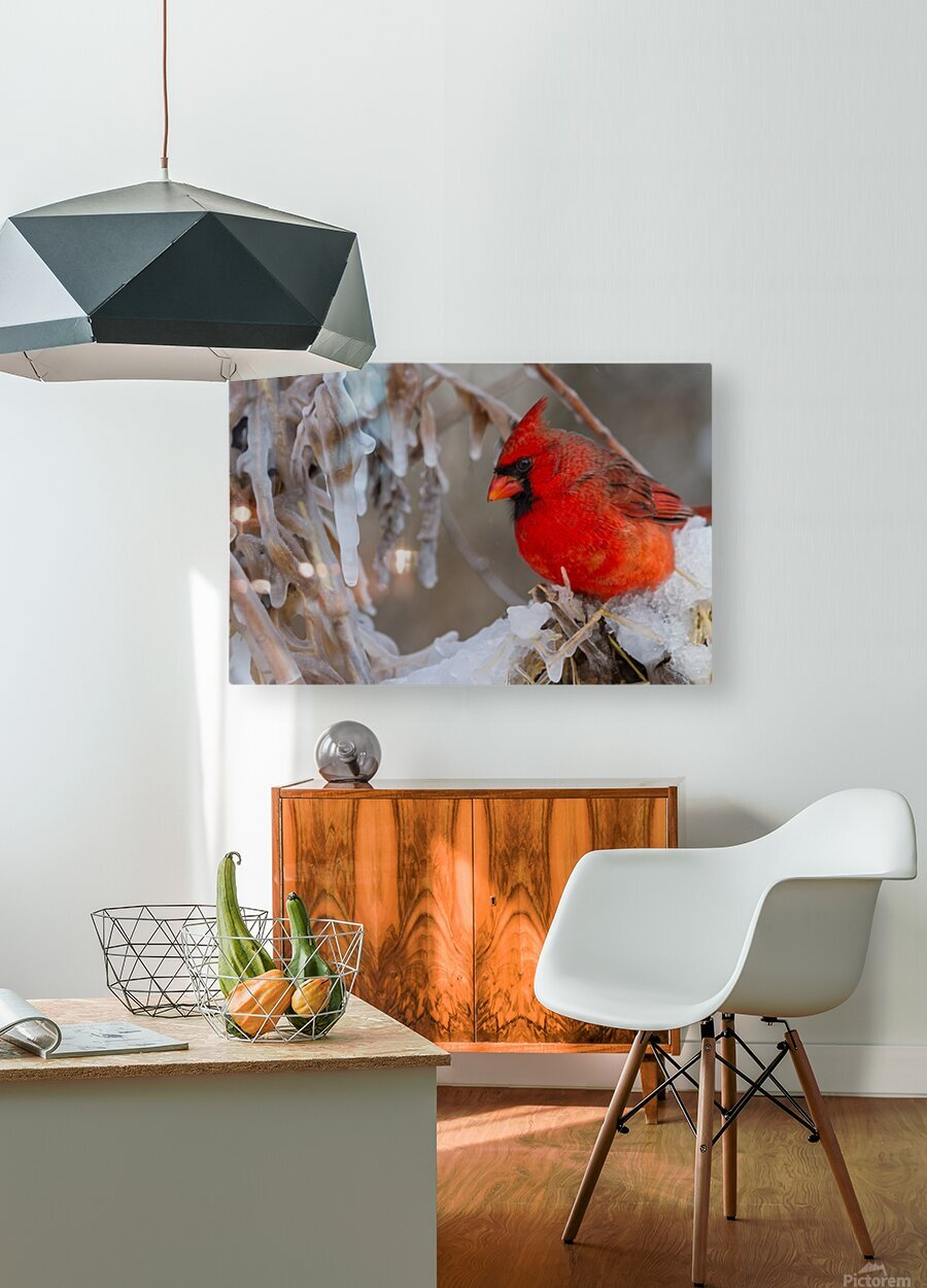 Cardinal ap 1869  HD Metal print with Floating Frame on Back