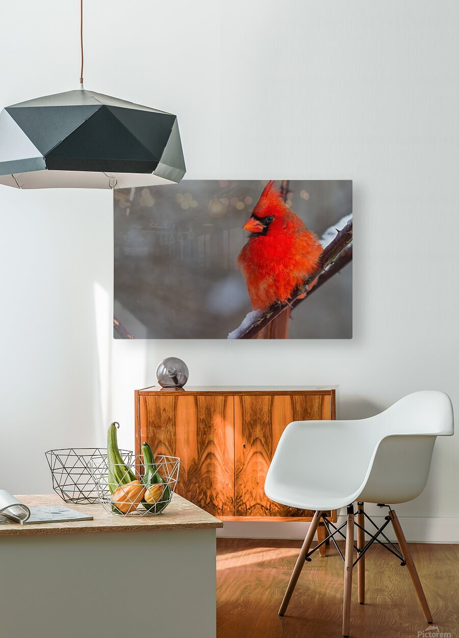 Cardinal ap 1866  HD Metal print with Floating Frame on Back