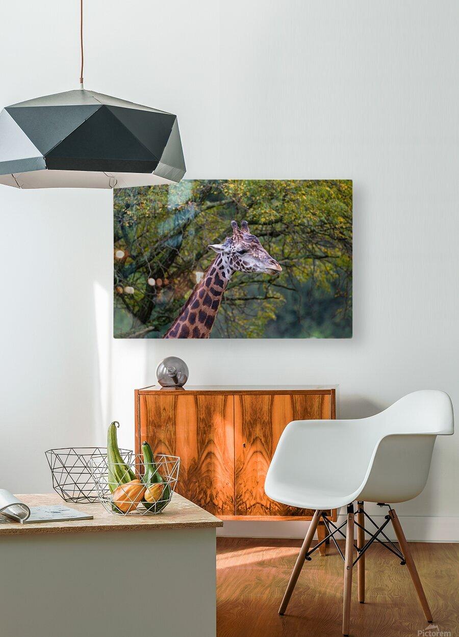 Portrait ap 2906  HD Metal print with Floating Frame on Back