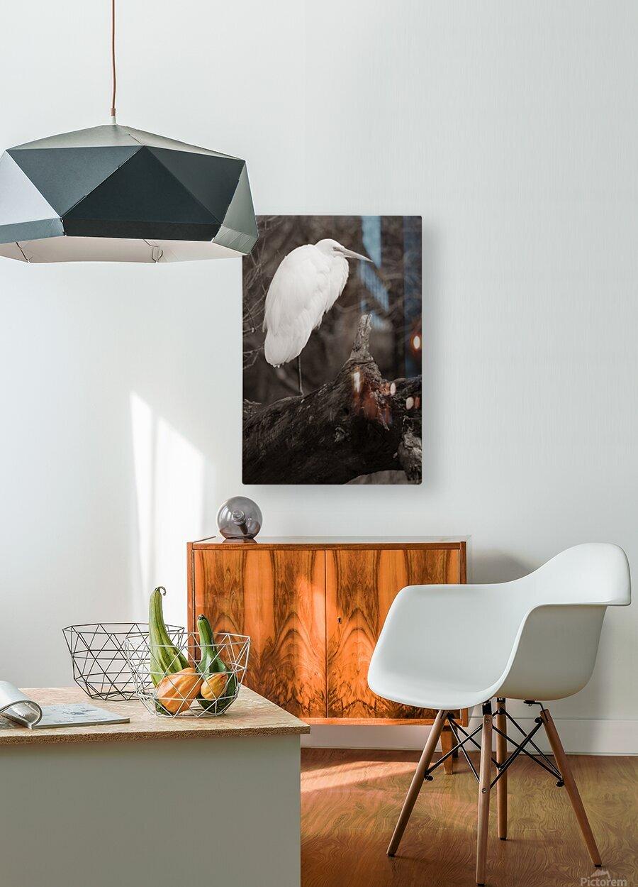 Great White Egret ap 1848 B&W  Impression métal HD avec cadre flottant sur le dos