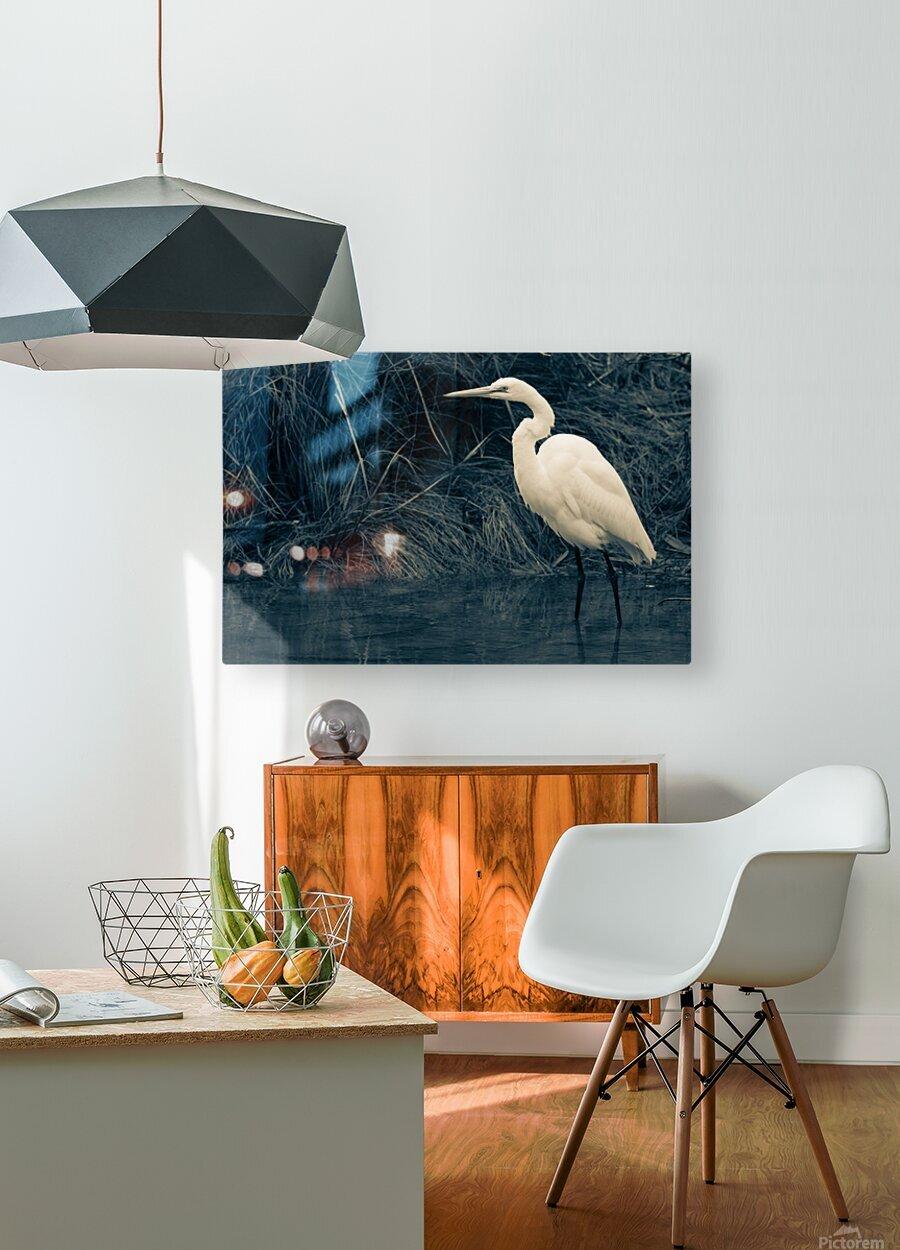 Great White Egret ap 1839 B&W  Impression métal HD avec cadre flottant sur le dos