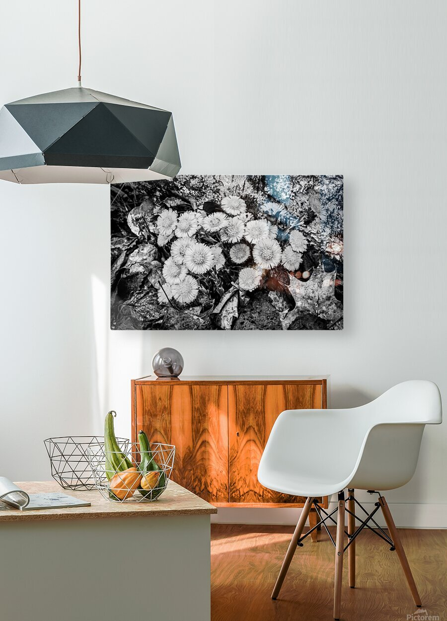 Flowers ap 2222 B&W  HD Metal print with Floating Frame on Back