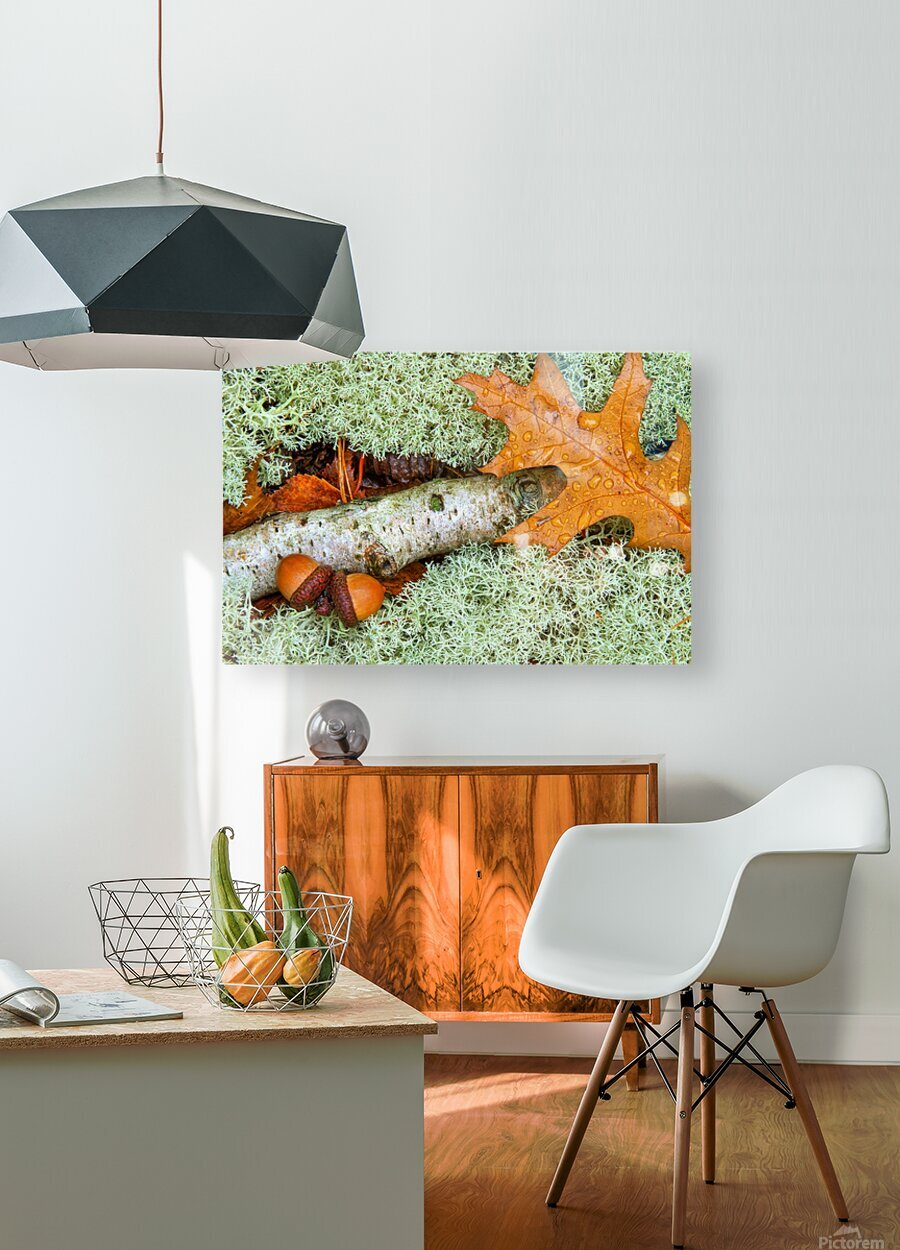 Pin Oak Leaf ap 1557  HD Metal print with Floating Frame on Back