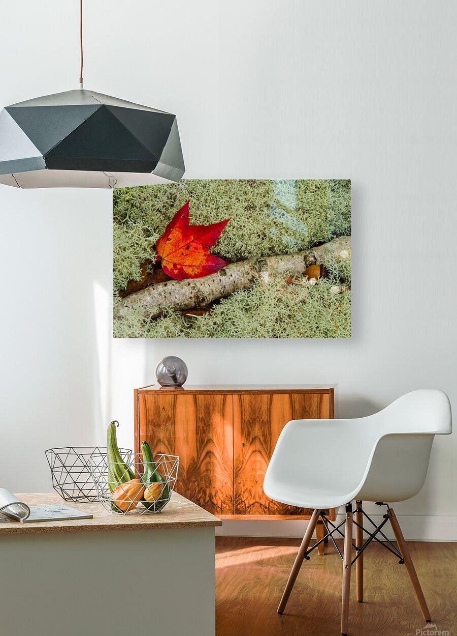 Maple Leaf ap 1555  HD Metal print with Floating Frame on Back