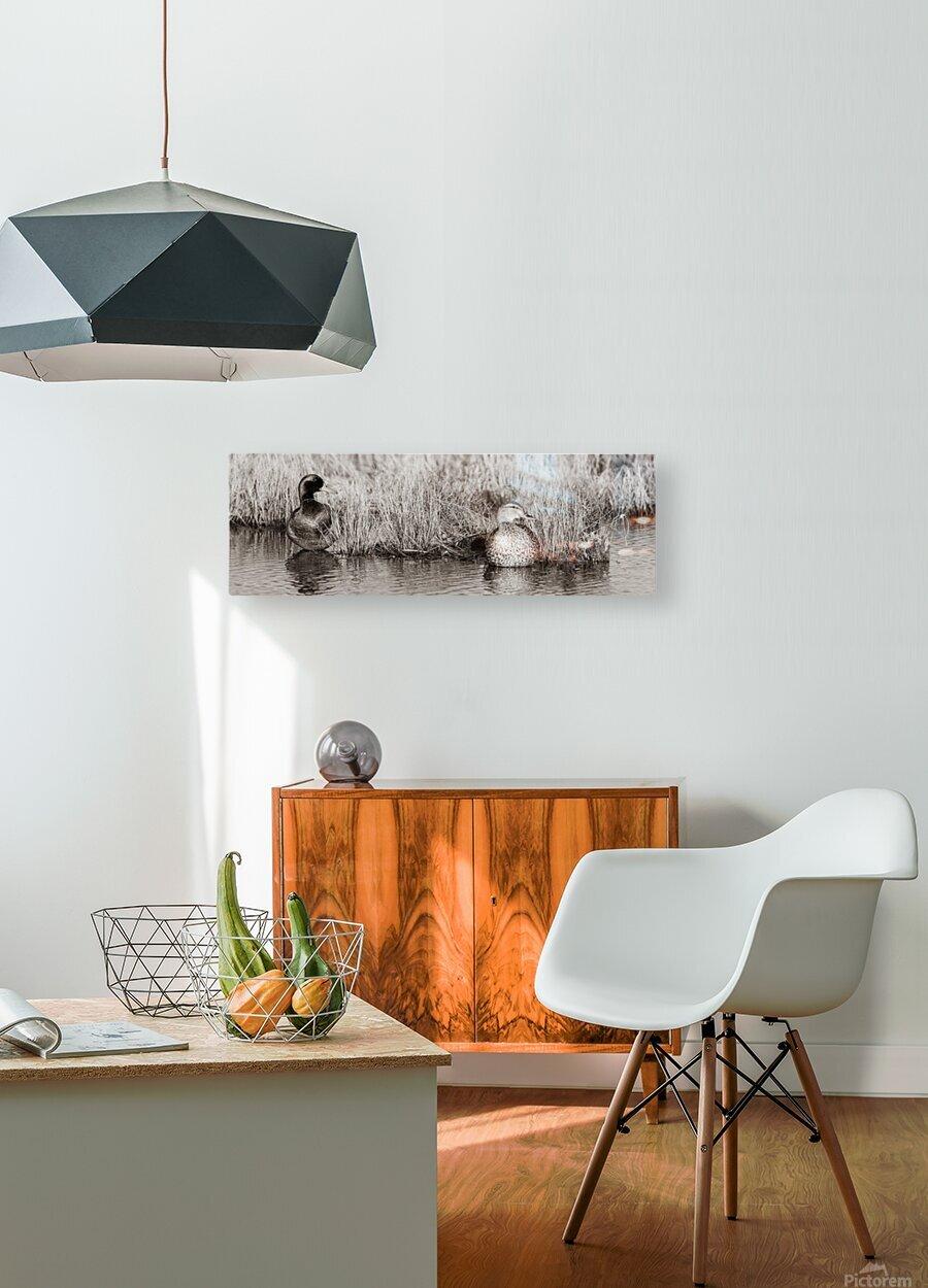 Mallard Pair ap 1775 B&W  HD Metal print with Floating Frame on Back