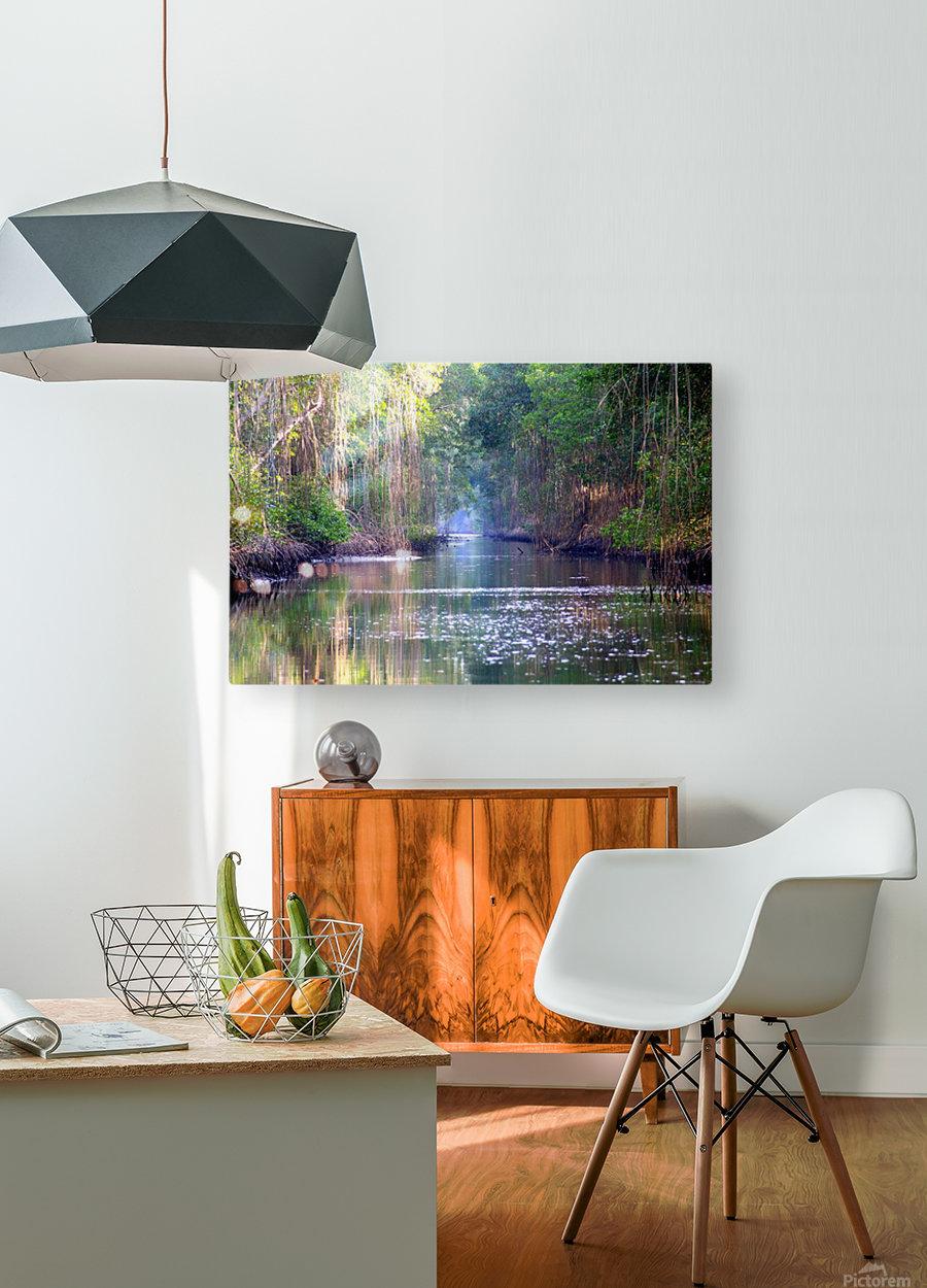 Caroni Swamp   Trinidad  HD Metal print with Floating Frame on Back